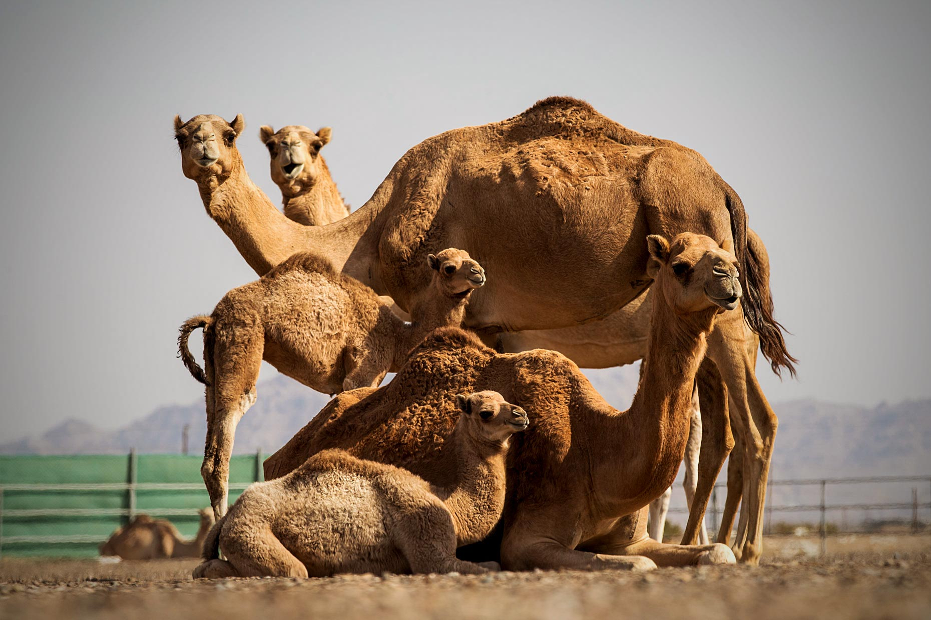 Wouter-Kingma-Web-Camel-Library-14