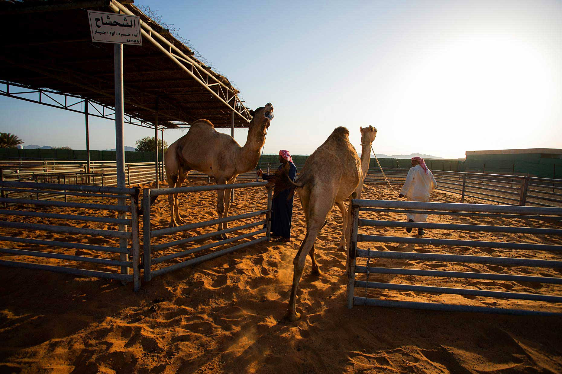 Wouter-Kingma-Web-Camel-Library-23