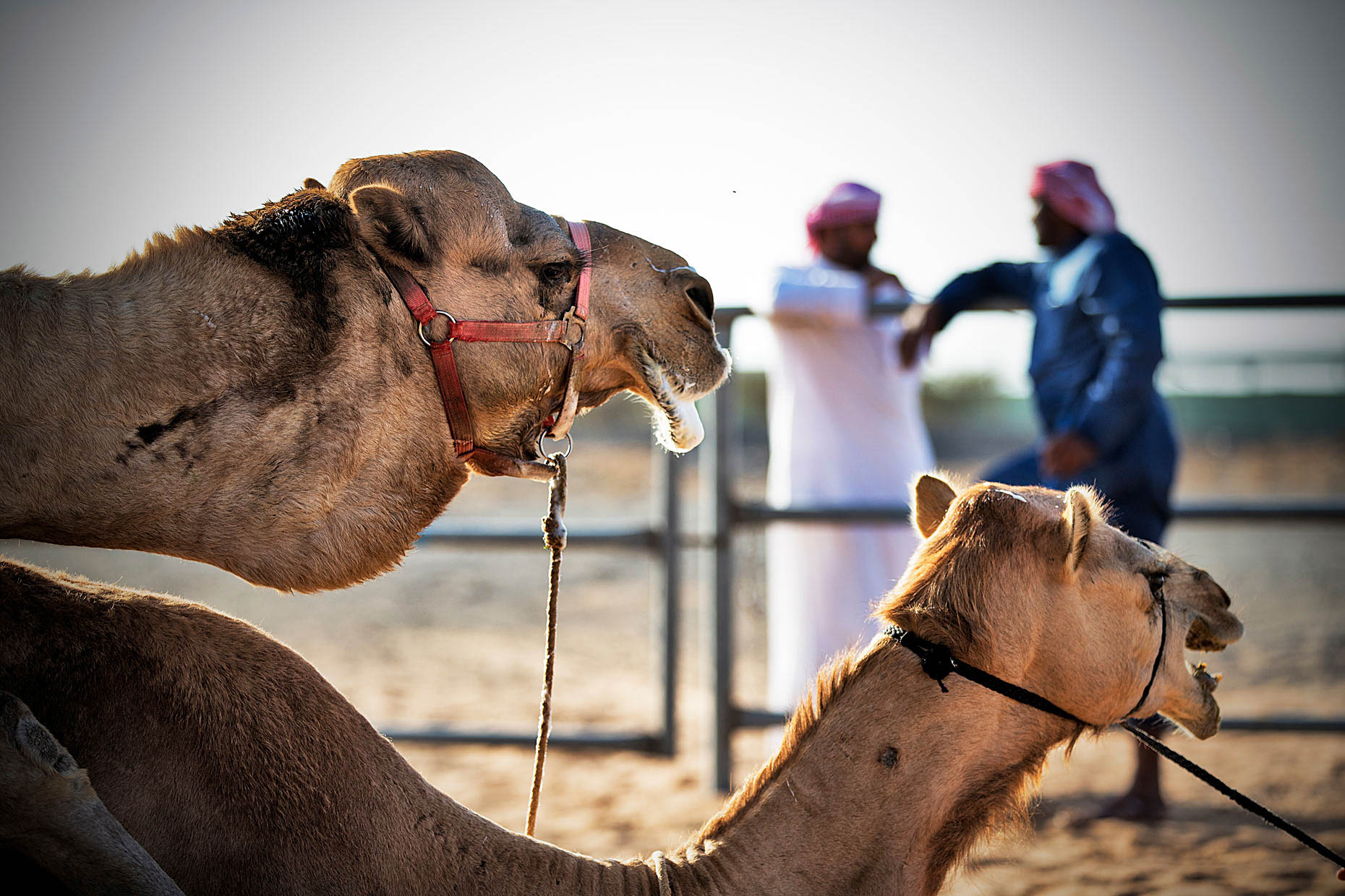 Wouter-Kingma-Web-Camel-Library-26